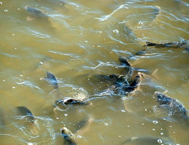 ferma piscicola slavesti